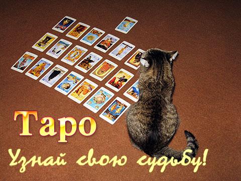 Акция от СМЕРТЬ. Отвечу на ваш вопрос с помощью хорарного таро. Tarot